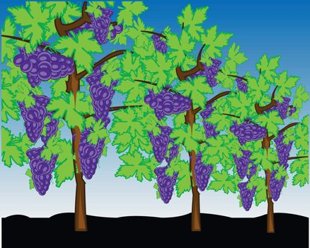 Vector illustration bush ripe grape year daytime