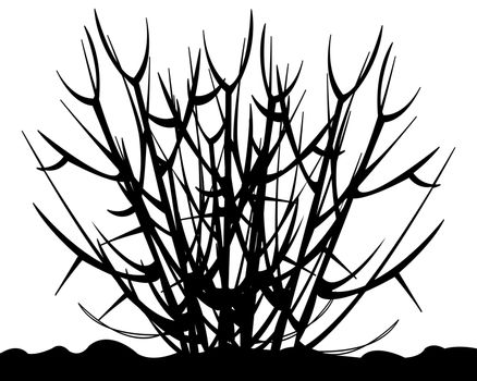 Silhouette of the bush without foliage on white background is insulated