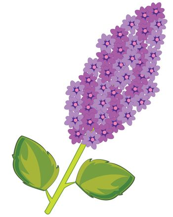 Vector illustration of the branch tree lilac with flower