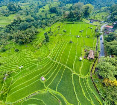Top down aerial view of rice terraces in Bali, Indonesia