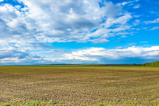 Beautiful landscape with green field and large white clouds.
