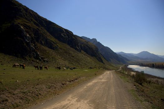 A dirt road running along the bed of the Katun mountain river at the foot of high hills. Altai, Siberia, Russia.