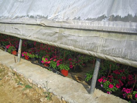 Flowers greenhouse in albanian vintage background wallpapers prints