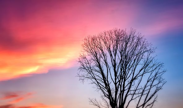 Bare Tree Silhouette against Beautiful Sunset Sky