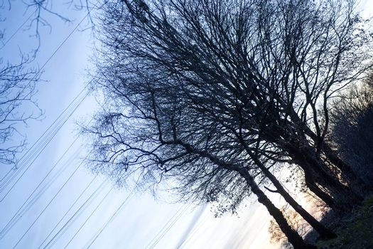 Tree diagonal on electric tower vintage background fine art in high quality prints