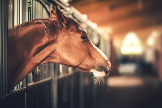 Equestrian Facility Horse