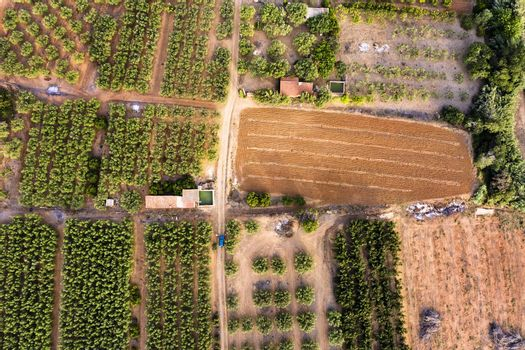 top view of different crop fields of a farm plantation, green field background agricultural industry aerial view