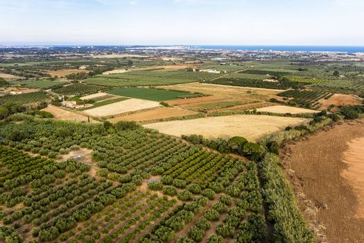 top view of farm fields near of the Mediterranean sea in Tarragona, field background agricultural industry aerial view