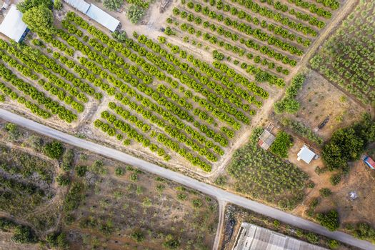 top view of a rural road between crops and farms, green field background agricultural industry aerial view