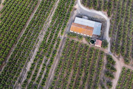top view of a farm and its plantation, field background agricultural industry aerial view