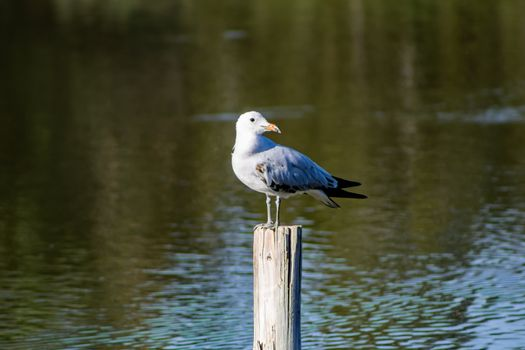 Bird perched on a pole in the natural landscape of Nules
