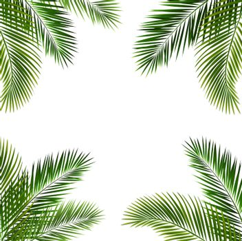 Frame With Palm Leaf Isolated White Background With Gradient Mesh, Vector Illustration