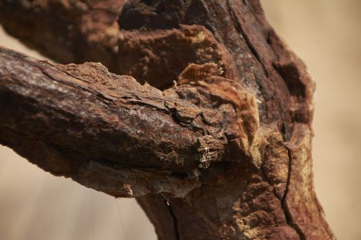Iron corroded by rust