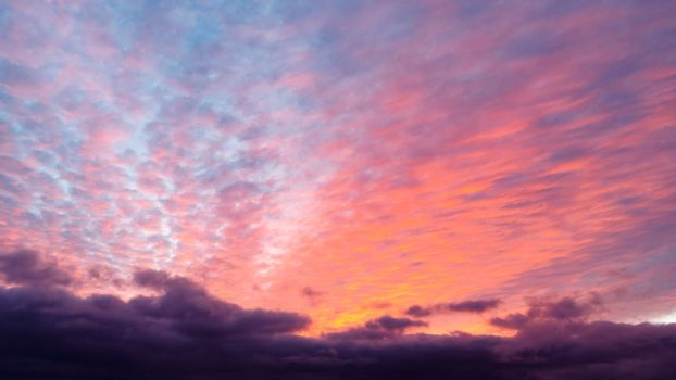 Pink cumulus clouds in the sky during sunset