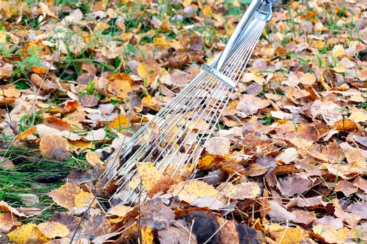 cleaning of fallen leaves in the courtyard with fan rakes