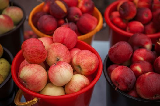 A bucket of freshly picked organic apples. Harvest concept