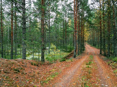 A dirt road in the mushroom pine forest