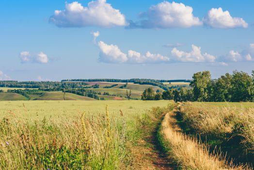 Dirt Road in Field.