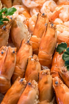 Freshly cooked prawns - shrimp on ice