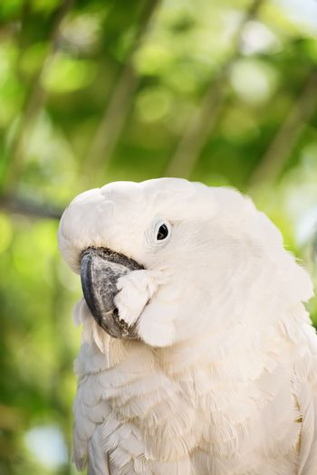 Close-up shot of a white parrot in nature.