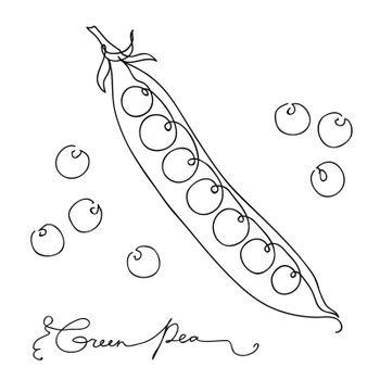 Hand drawn sketch green peas. isolated on white background. Continuous line art. Outline style hand drawn vector illustration.