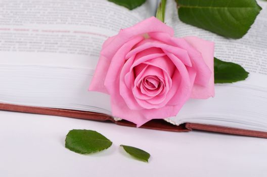 The rose on the book close up