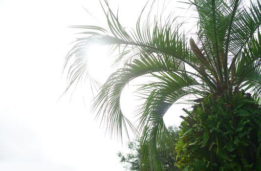 Palm trees against the sunny sky