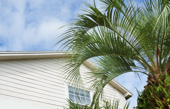 Residential building and palm tree at the backyard