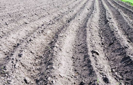 plowed land prepared for planting seeds