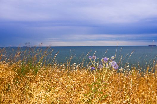 meadow grass growing on the seashore
