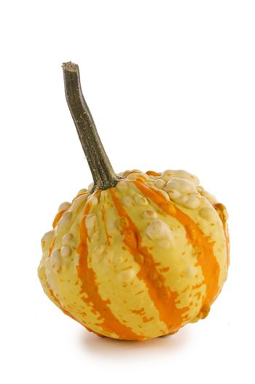 One striped pumpkin