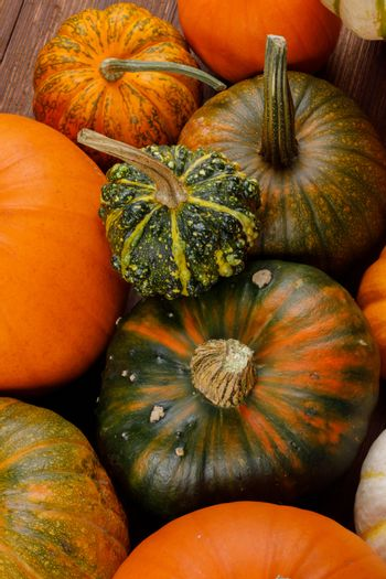 Assortiment of autumn harvested pumpkins in a heap background , Halloween holiday concept