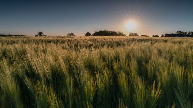 Sundown over a corn field