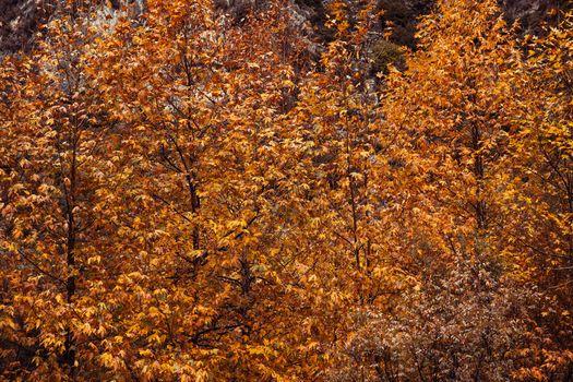 Beautiful autumn nature