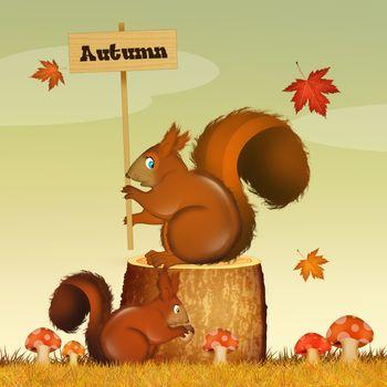 illustration of squirrel in autumn