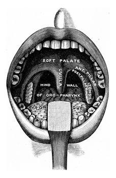 The receiving room, vintage engraved illustration.