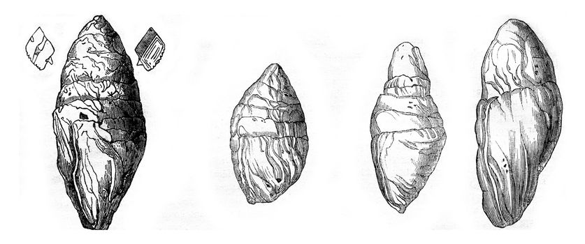 Coprolite the Lias at Lyme Regis, Other Coprolites Lyme, vintage engraved illustration. Magasin Pittoresque 1844.