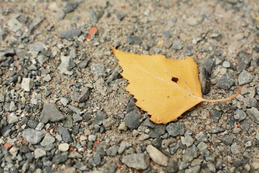 Yellow autumn leaf on the old destroyed asphalt with stones