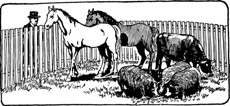 This illustration represents Farm Animals in Corral, vintage line drawing or engraving illustration.