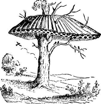 Nest of Sociable or Republican Birds vintage illustration.