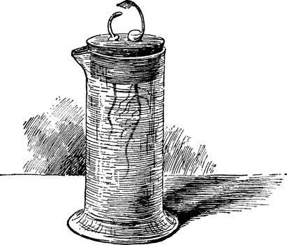 Germinating Peas vintage illustration.