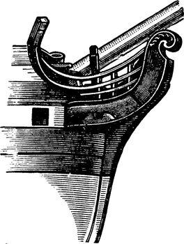 Fiddle Head, vintage illustration.
