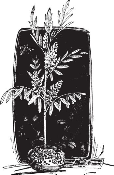 Indigo vintage illustration.