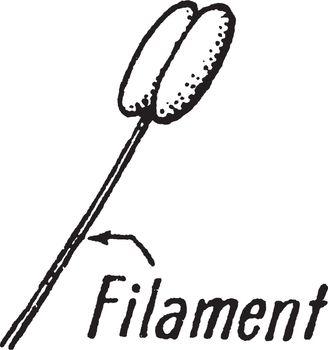 Filament vintage illustration.
