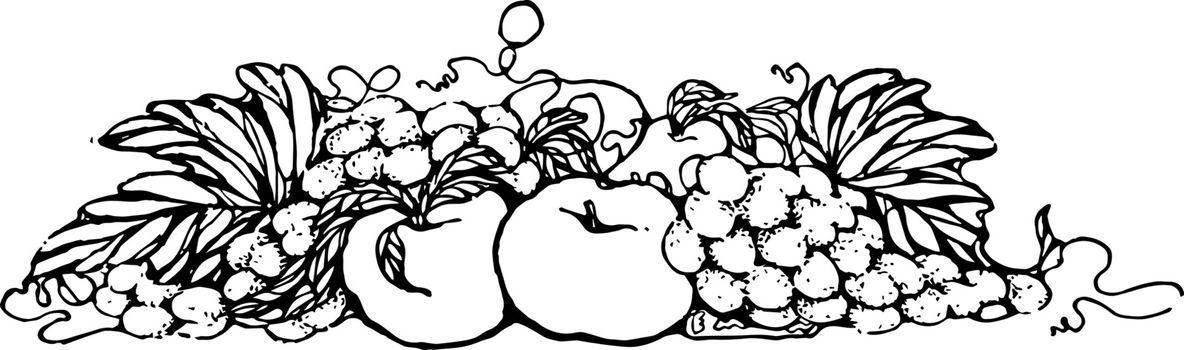 Fruit Divider vintage illustration.