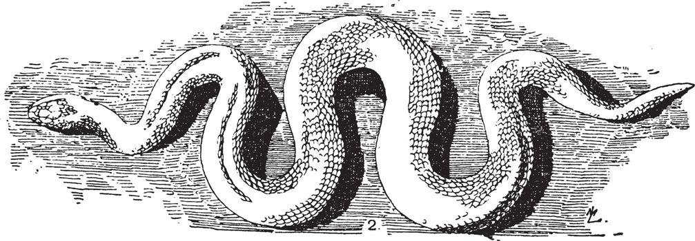 Serpent Cast is a word of Latin origin meaning something that cr