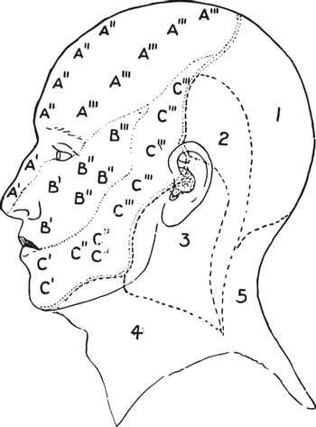 Nerve Areas of the Face and Scalp, vintage illustration.