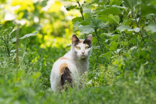 Beautiful red cat on the grass, nature, summer