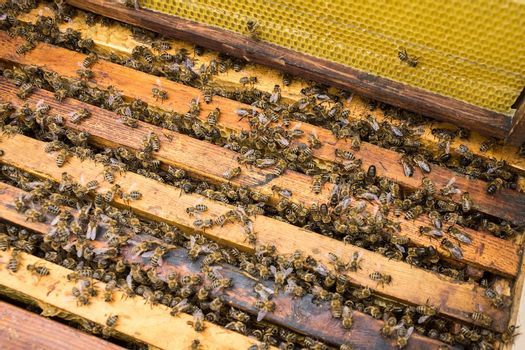 Bees are paying attention to the developing larva of the Queen Bee.