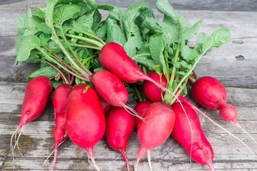 Fresh radishes on a wooden background, vegetables